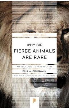 Why Big Fierce Animals Are Rare - An Ecologist`s Perspective